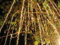 Where to rent TWINKLE LIGHTS in Ft. Collins CO